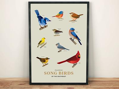 Songbirds of the Southeast wren finch bluebird bluejay cardinal songbirds wildlife birds birds of illustration