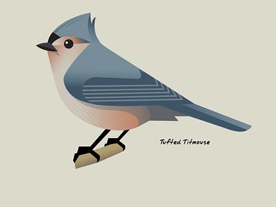 Tufted Titmouse Bird graphicdesign illustration simplified vector wildlife illustration birds wildlife stylized bird