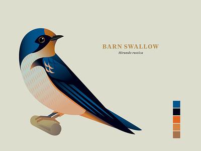 "Barn Swallow, ""Birds of the Smokies"" vector wildlife illustration birds"