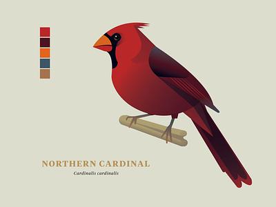 "Northern Cardinal, ""Birds of the Smokies"" birds of vector wildlife illustration birds"