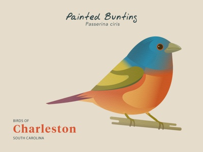 Birds of Charleston: Painted Bunting wildlife design natural history birds travel poster illustration