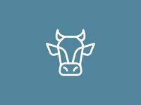 Jersey Steer