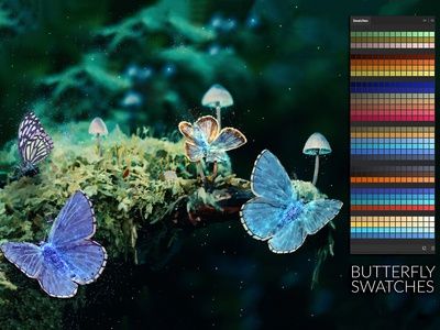 Butterfly Swatches