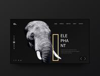 Elephant Minimal Inspiration Web Design