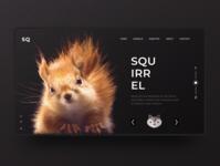 Squirrel Inspiration Web Design