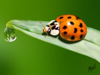 MESH WORK : Ladybug