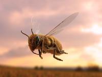 Honeybee Flying