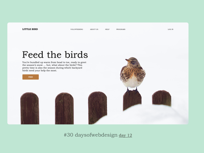 Feed the birds concept website design landingpage minimal website ui ux user interface webdesigner webdesign