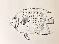 freehand pen sketch_fish