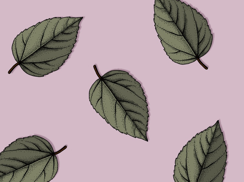 Leaves on Purple design illustrator botanical illustration illustration
