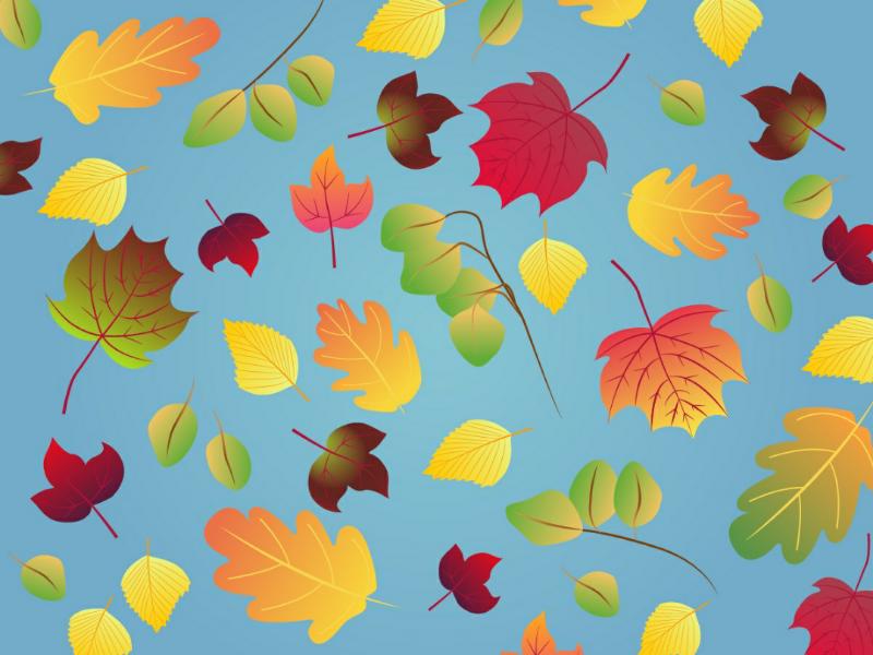 November leaves leaves november fall autumn
