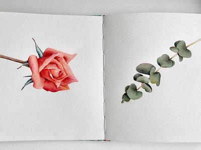 watercolor watercolors illustrate