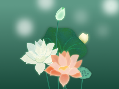 lotus flower illustration