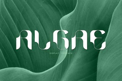 ALGAE Display Typeface