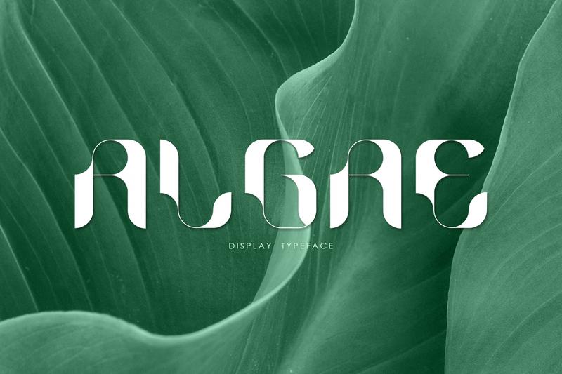 ALGAE Display Typeface display font font family algae typeface design