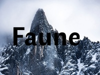 Faune - Free Font Family