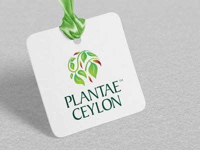 Branding for Upscale Cinnamon Export sri lanka lka nature green eco export cinnamon monogram logo brand identity brandmark branding