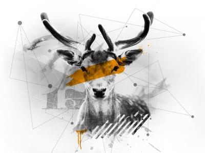 Deer deer illustration