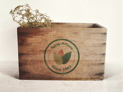 logo design on wooden box logo branding vintage