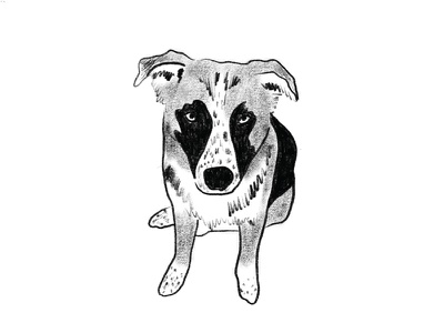 Zooey shepherd german pencil procreate illustration doodle drawing dog portrait pet