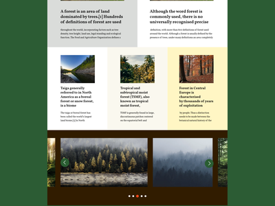 Forest website layout ui photo colors forest graphic design web