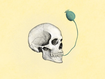 skull + poppy skull illustration drawing