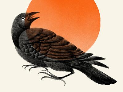 Graúna grauna orange crow blackbird poster sun black bird illustration