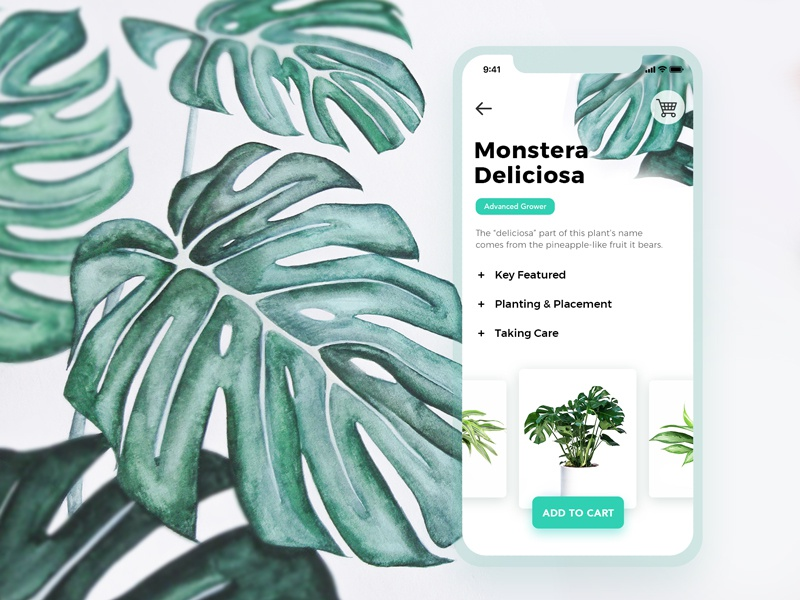 Monstera Deliciosa painting water color ios green cart store vegetation plants app mobile ux ui