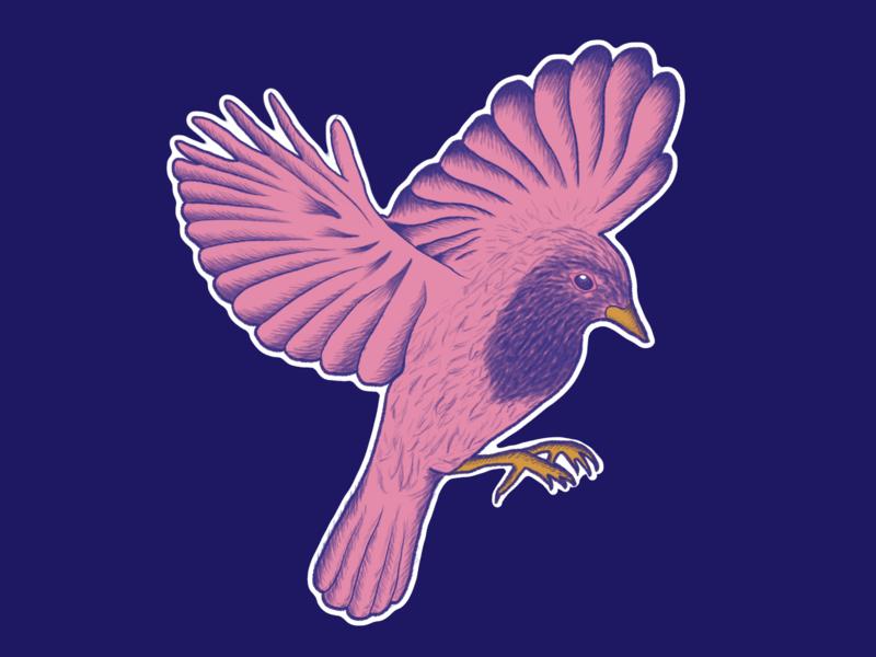 Bird study: European robin