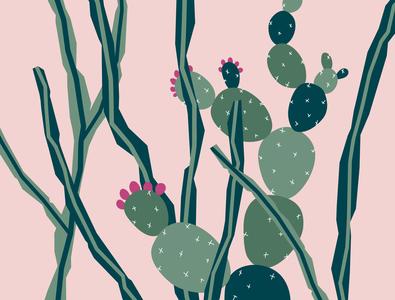 Melbourne Cactus