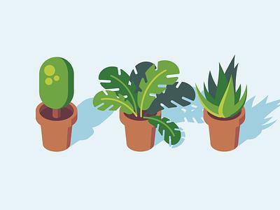 House Plants flat illustration vector nature plants house