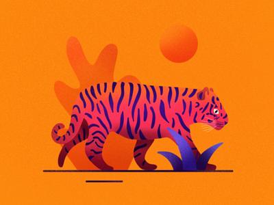 Tiger sun pink jungle tiger
