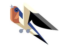 Barn Swallow WIP