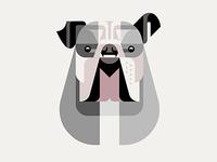 British Bulldog Portrait WIP