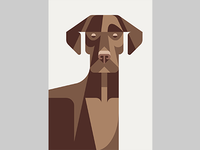Labrador Retriever Portrait WIP
