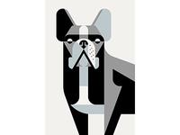 French Bulldog Portrait WIP