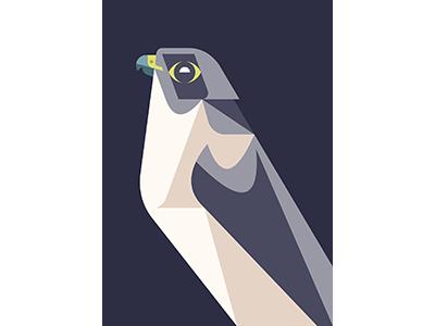Peregrine Falcon WIP brill josh bird illustration design art wip falcon peregrine