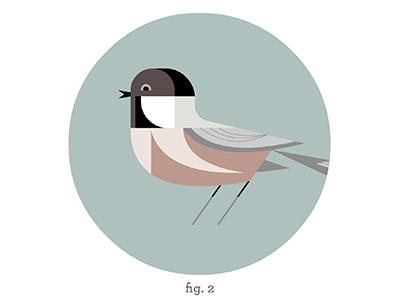 Chickadee Habitat Edition WIP print bird design illustration artwork wip edition habitat chickadee