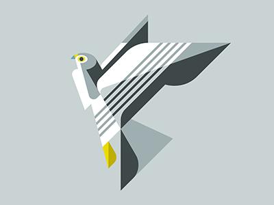 Peregrine Falcon WIP brill josh illustration design art bird falcon peregrine