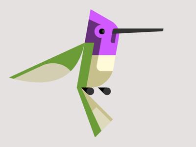 Hummingbird dribbble
