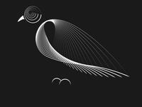 Birds 007