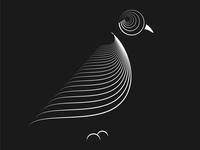 Birds 009