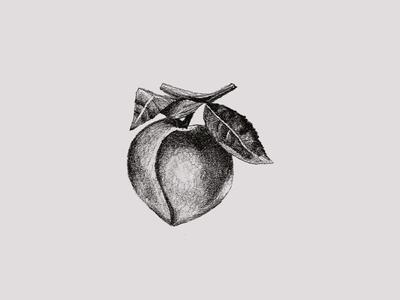 Jam Series Sketch - Peach