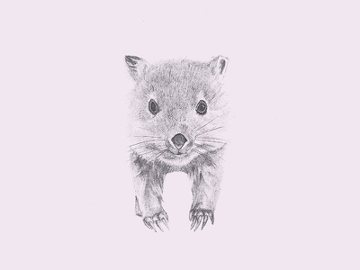 Baby Wombat sketches illustration