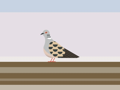 Turtle dove geometric minimal nature wildlife endangered bird turtledove