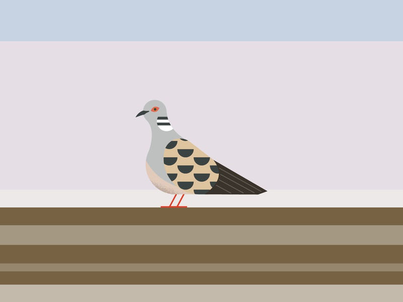 Turtle dove geometric minimal nature wildlife endangered bird turtledove