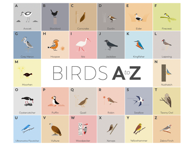Birds A-Z nature wildlife minimal a-z birds vector