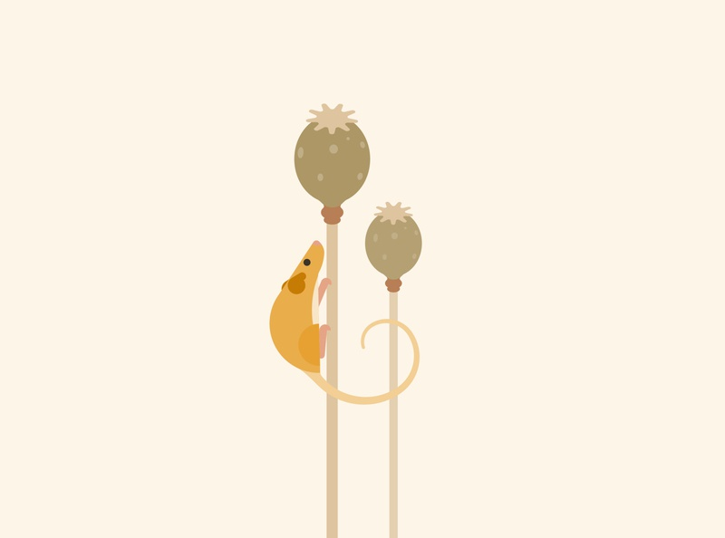 Dormouse wildlife art vector minimal poppy endangered dormouse mouse wildlife