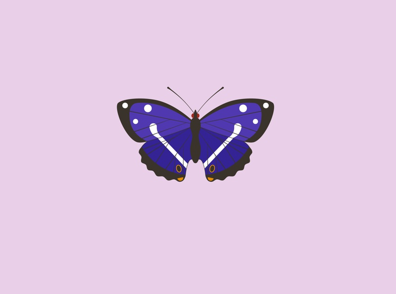 Purple emperor vector illustration endangered wildlife art wildlife conservation purple emperor butterfly