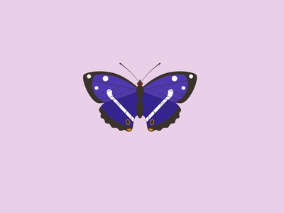 Purple emperor vector illustration endangered wildlife art wildlife conservation purple emperor butterfly